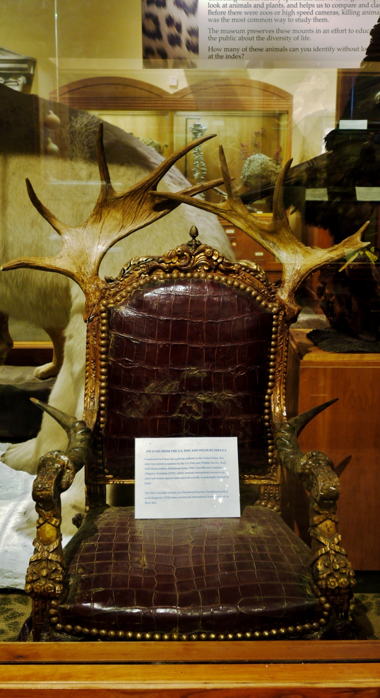 The manliest chair ever, made of real animal skin and bones, at the Museum of Science